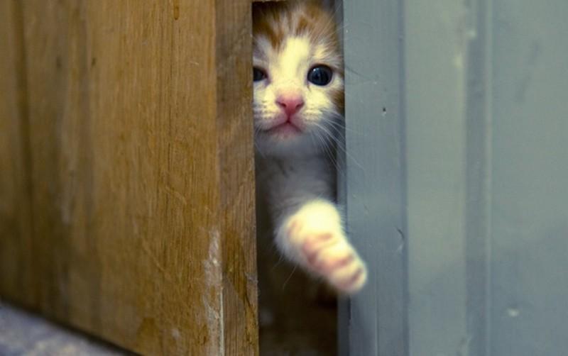 сделать дверь для кошки фото